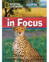 NGR : CHEETAHS IN FOCUS B2 (+ DVD)