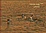 Σκοτεινά νερά - Ελευσίνα, 1994 - 2013